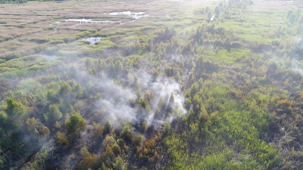 Лесной пожар в Гродненской области.JPG