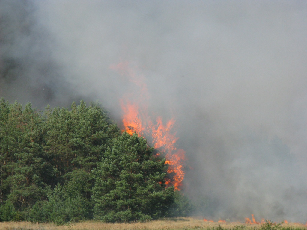 05_09 лесные пожары.jpg